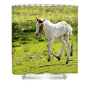 Romping Through The Field Shower Curtain