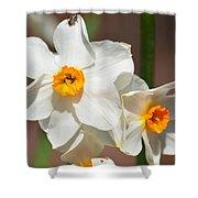 Daffodil Dazzle Shower Curtain