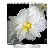 Daffodil Diagonal Shower Curtain