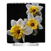 Daffodil Dream Shower Curtain