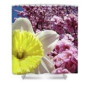 Daffodil Flower Art Prints Pink Tree Blossoms Blue Sky Baslee Shower Curtain