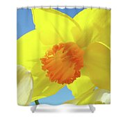 Daffodil Flowers Artwork 18 Spring Daffodils Art Prints Floral Artwork Shower Curtain by Baslee Troutman