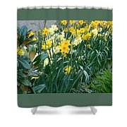 Daffodil Garden Shower Curtain