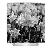 Daffodil Glow Monochrome By Kaye Menner Shower Curtain
