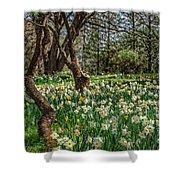 Daffodil Hill Gardens Shower Curtain