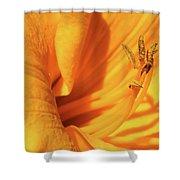Daffodil - Peeping Tom 05 Shower Curtain