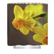 Daffodil Sunrise Shower Curtain