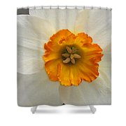 Daffodil Texture Composite Shower Curtain
