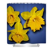 Daffodil Trio Shower Curtain