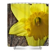 Daffodil Wood Composite Shower Curtain