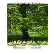 Daffodils And Narcissus Under Tree Shower Curtain