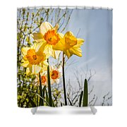 Daffodils Backlit Shower Curtain