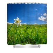 Daffodils Blossimg At Cavalla Plains 2017 Vi - Fioritura Dei Narcisi Al Pian Della Cavalla 2017 Shower Curtain