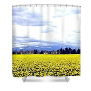 Daffodils By The Million Shower Curtain