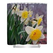 Daffodils Shower Curtain