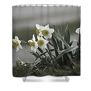 Daffodils Desaturated Shower Curtain