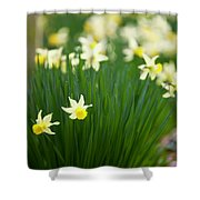 Daffodils In A Bunch Shower Curtain