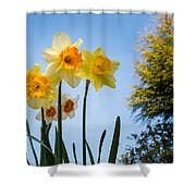 Daffodils In The Sky Shower Curtain