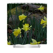 Daffodils In The Smokies Shower Curtain