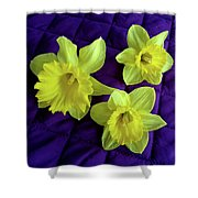 Daffodils On A Purple Quilt Shower Curtain