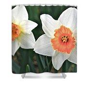 Daffodils Orange And White Shower Curtain