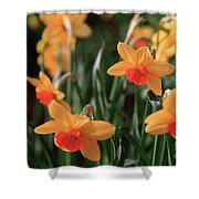 Daffodils Shower Curtain by Tracy Hall
