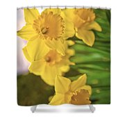 Daffodils V2 Shower Curtain