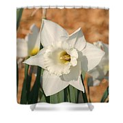 Dafodil168 Shower Curtain