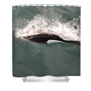 Dahl Dolphin Shower Curtain
