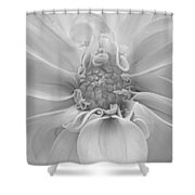 Dahlia 1 Bw Shower Curtain