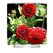 Dahlia 1 Shower Curtain