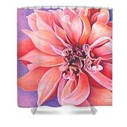 Dahlia 2 Shower Curtain by Phyllis Howard