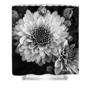 Dahlia Burst B/w Shower Curtain