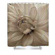 Dahlia Detail Shower Curtain