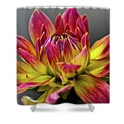 Dahlia Flame Shower Curtain