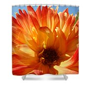 Dahlia Floral Orange Yellow Flower Botanical Art Prints Canvas Baslee Troutman Shower Curtain