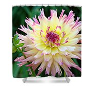 Dahlia Floral Pink Yellow Flower Garden Baslee Troutman Shower Curtain