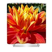 Dahlia Florals Orange Dahlia Flower Art Prints Canvas Shower Curtain