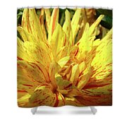 Dahlia Flower Art Collection Giclee Prints Baslee Troutman Shower Curtain