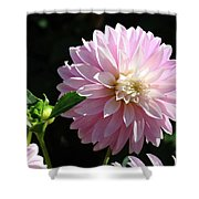 Dahlia Flower Art Pink Dahlias Giclee Art Prints Baslee Troutman Shower Curtain