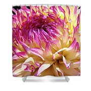 Dahlia Flower Art Sunlit Floral Prints Baslee Troutman Shower Curtain