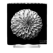 Dahlia  Flower Black And White Square Shower Curtain