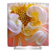 Dahlia Flower Macro Pink White Dahlias Floral Baslee Troutman Shower Curtain