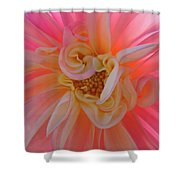 Dahlia Flower Sunlit Pink White Dahlia Garden Floral  Shower Curtain