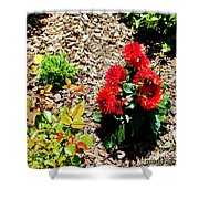 Dahlia Flowers Shower Curtain by Corey Ford