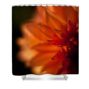 Dahlia Fueur Shower Curtain
