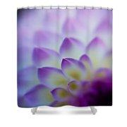 Dahlia Glow Shower Curtain