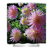 Dahlia Group Shower Curtain