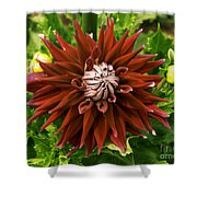 Dahlia In Bloom 18 Shower Curtain