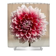 Dahlia- Pink And White Shower Curtain